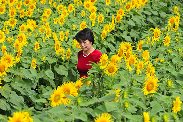 Những vườn hoa hướng dương đang nở rộ lại trở thành điểm check in mới của các chị em ở Hà Nội - Ảnh 5.