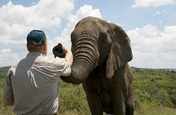 Người đàn ông được đàn voi tới viếng mộ suốt 7 năm  - Ảnh 2.