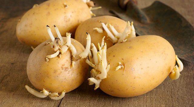 Sự thật về 3 thực phẩm cấm kị ăn với khoai tây, đây mới là thứ không nên ăn nhất  - Ảnh 4.