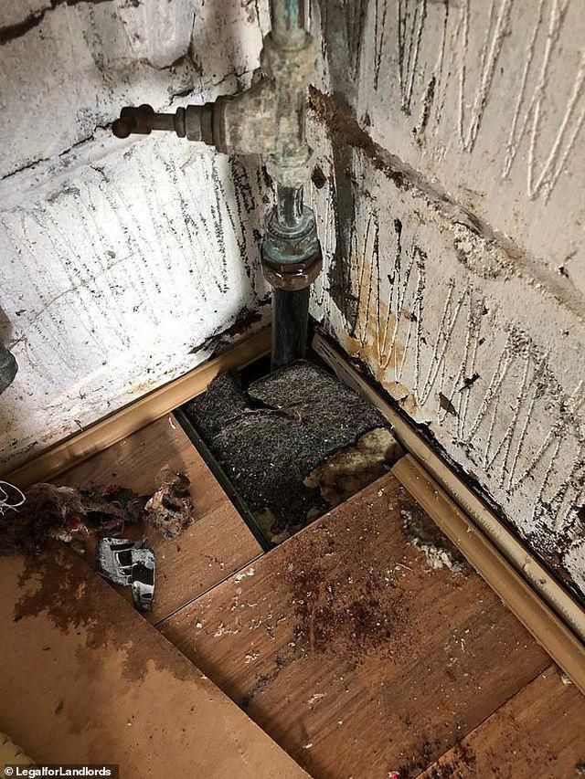 Cơn ác mộng của chủ trọ với căn nhà đầy rác thải và người thuê trọ trốn nợ - Ảnh 1.