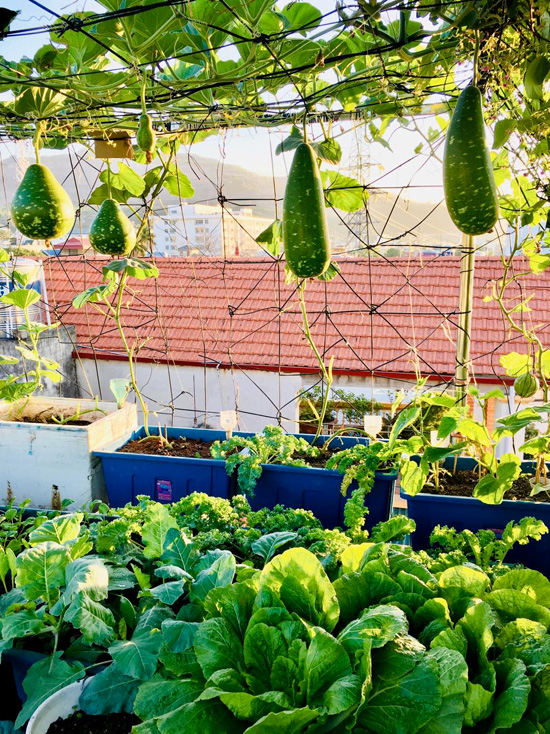 Vườn sân thượng 40 m2 tốt như trang trại  - Ảnh 2.
