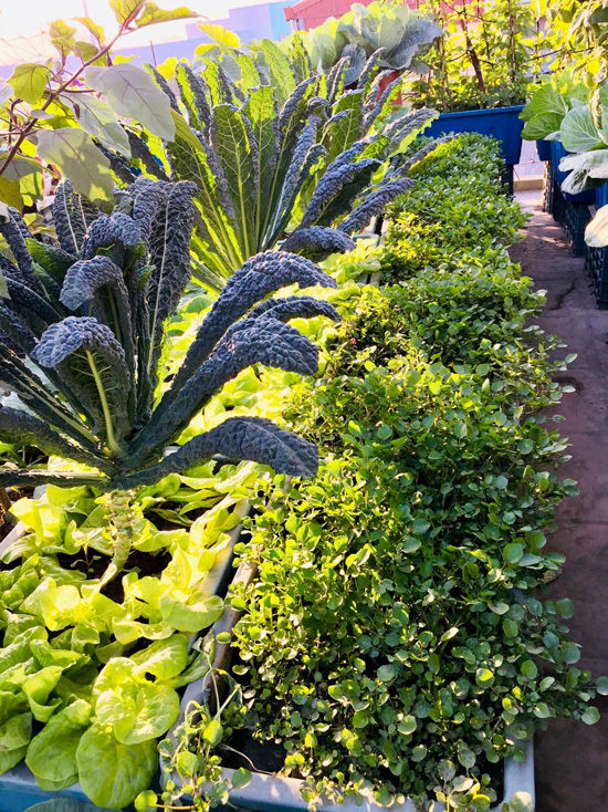 Vườn sân thượng 40 m2 tốt như trang trại  - Ảnh 4.