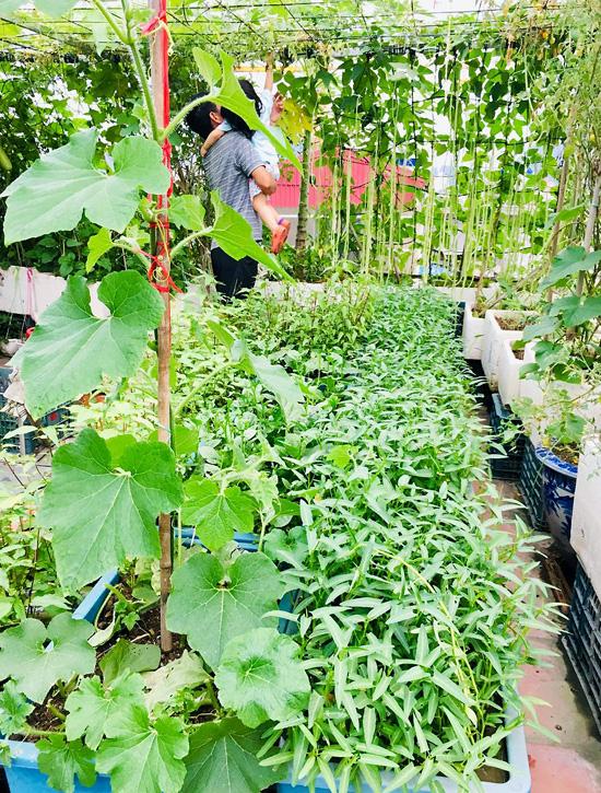 Vườn sân thượng 40 m2 tốt như trang trại  - Ảnh 9.