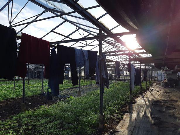 Phát hiện 5 người Việt sống như nô lệ trong hoàn cảnh khổ sở, tù túng tại một vườn ươm cây ở nước Anh - Ảnh 4.