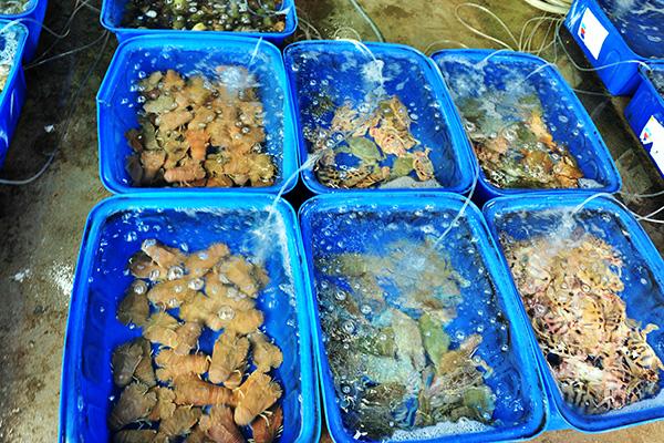 """Chợ hải sản """"không mặc cả"""" trên đảo Nam Du - Ảnh 1."""