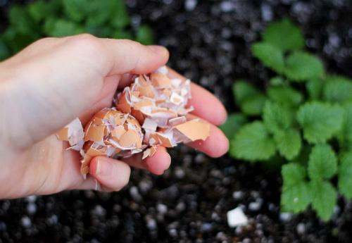 Làm trứng rán xong đừng vội vứt vỏ trứng đi, những tác dụng hay ho của nó sẽ khiến bạn ngạc nhiên đấy - Ảnh 4.
