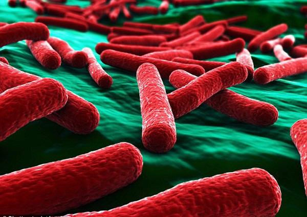 Kinh hãi: Vi khuẩn kháng kháng sinh được tìm thấy trong hầu hết những túi đồ trang điểm của phái đẹp - Ảnh 2.