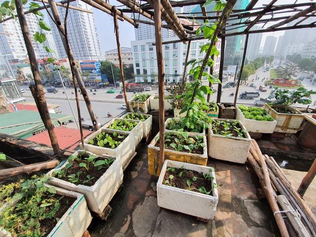 Độc đáo nông trại trồng rau, nuôi gà trên sân thượng, giữa lưng trời ở Hà Nội - Ảnh 5.