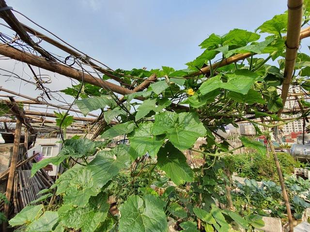 Độc đáo nông trại trồng rau, nuôi gà trên sân thượng, giữa lưng trời ở Hà Nội - Ảnh 6.