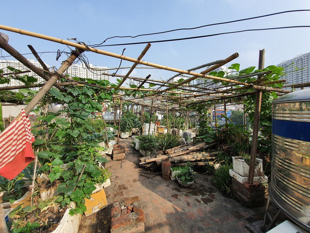 Độc đáo nông trại trồng rau, nuôi gà trên sân thượng, giữa lưng trời ở Hà Nội - Ảnh 9.