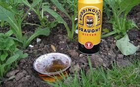 Những công dụng không thể ngờ đến của bia trong cuộc sống hằng ngày mà bạn có thể chưa biết - Ảnh 5.