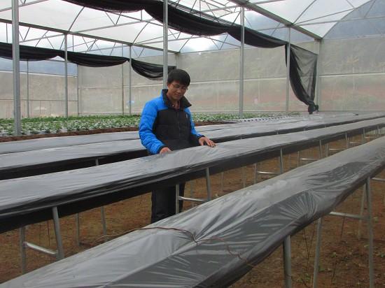 Để tăng năng xuất sản lượng dâu tây, anh Lực xây dựng thêm nhà kính, hệ thống nước tưới nhỏ giọt cho vườn dâu tây.