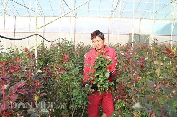 Cứ hai ngày một lần cắt, gia đình bà Bốn bán cho các vựa hoa khoảng 5.000 cành hoa với giá 1.200 đồng/cành. Ảnh: Văn Long.