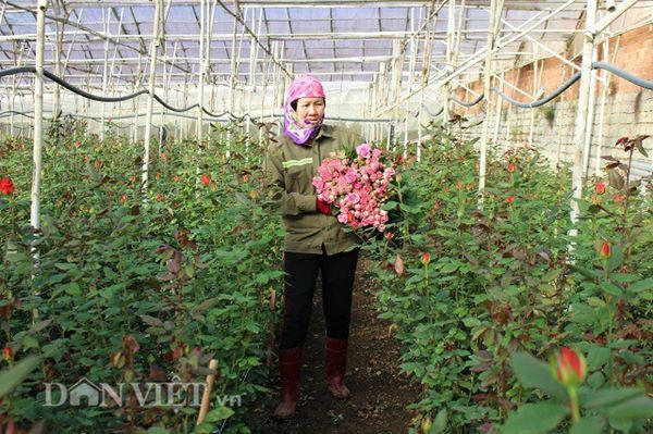 Gia đình bà Bốn đã có thu nhập khá nhờ trồng hoa hồng. Ảnh: Văn Long.