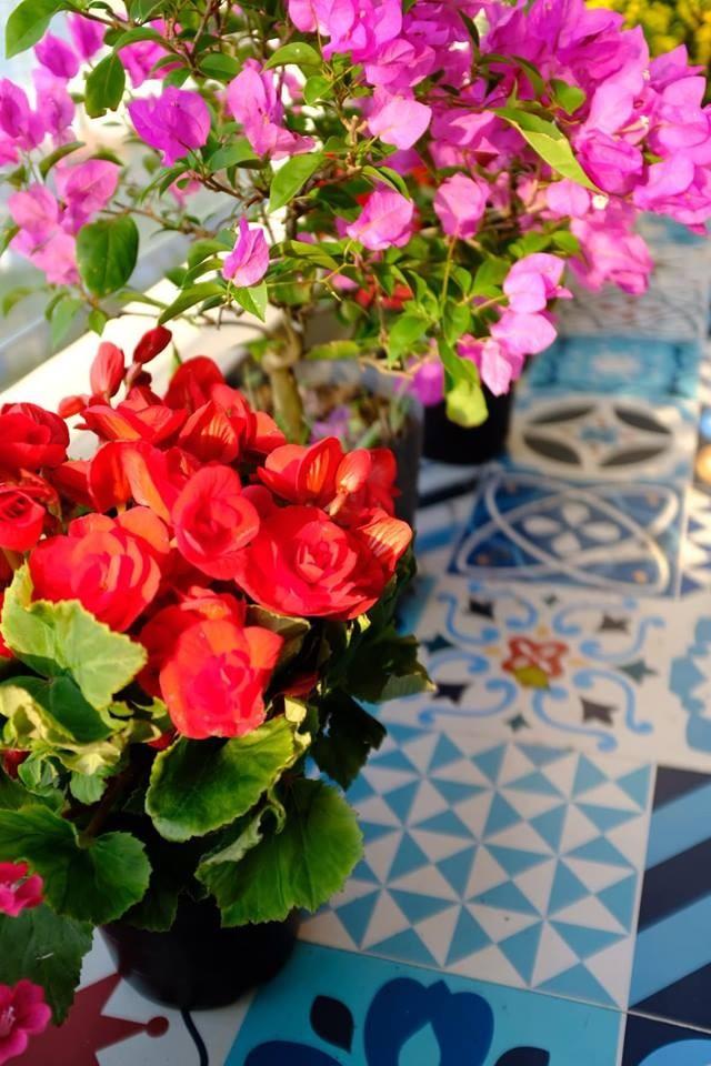 Ban công rực rỡ màu sắc từ hoa đến gạch lát.