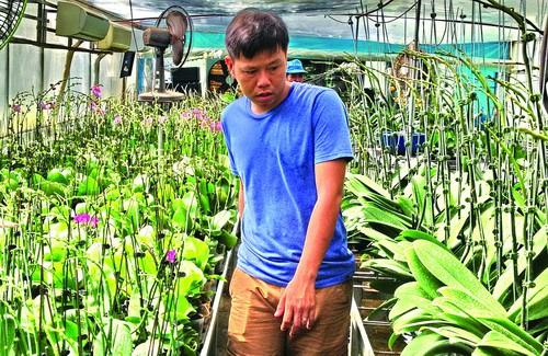 Lan hồ điệp loại lớn ra hoa dài hơn 1m tại vườn lan của Chí.