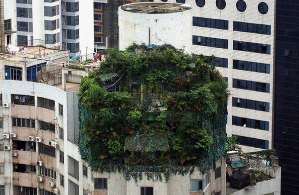 """4, """"Ốc đảo"""" xanh rì nằm trên nóc của một tòa nhà 19 tầng, tọa lạc tại Quảng Châu, tỉnh Quảng Đông, Trung Quốc."""