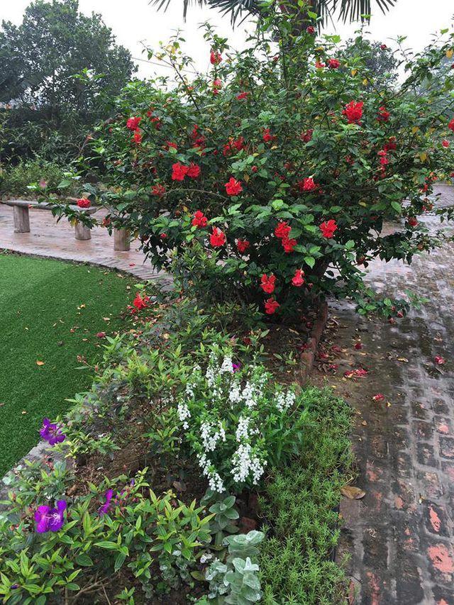 Vườn nhà được vợ chồng anh trồng rất nhiều loại hoa.