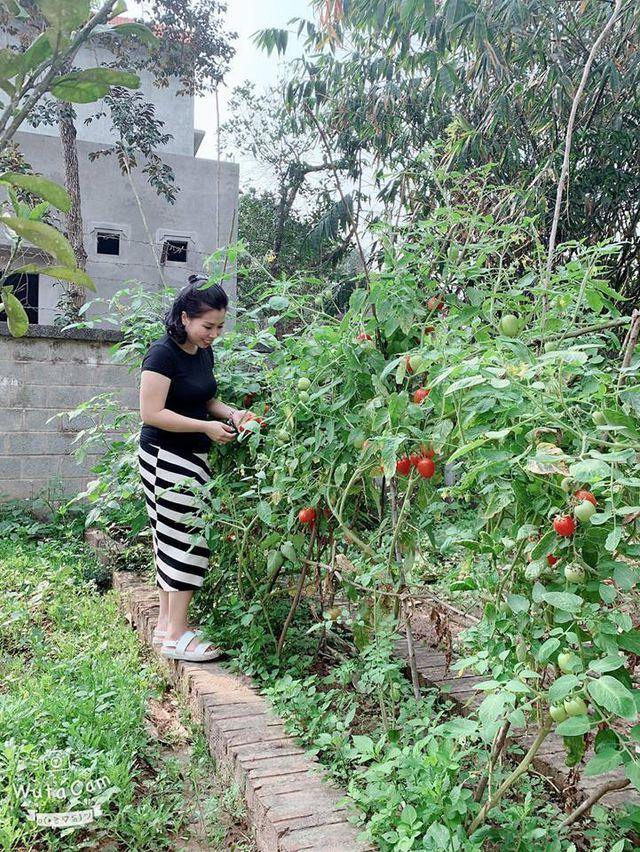 Căn nhà vườn của vợ chồng Hồng Đăng cách trung tâm thành phố Hà Nội hơn 30 phút đi ô tô.