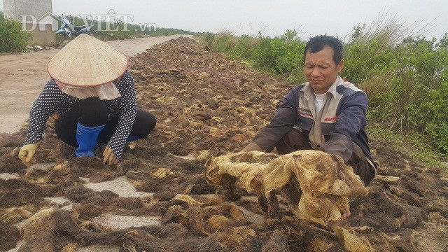 Nhờ hái lộc trời cho mà nhiều hộ dân ở ven biển huyện Kim Sơn có thêm nguồn thu nhập đáng kể.