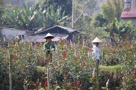 Ngoài nâng cao thu nhập cho gia đình, chị Xuyến còn tạo việc làm cho nhiều lao động là người địa phương.