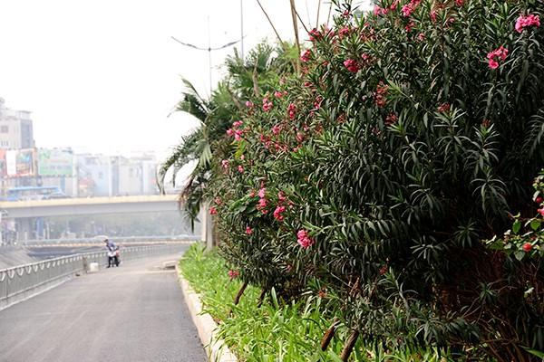 Sát lề đường được trông nhiều loại hoa khá đẹp mắt.