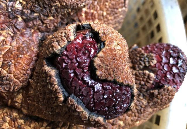 Nhiều u cục nổi trên nấm Ngọc cẩu toác vỏ để lộ bên trong màu tím bầm.