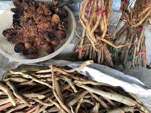 Ngoài Ngọc cẩu, chị Thọ còn bán rất nhiều loại đặc sản khác của vùng núi nơi đây như sâm cau, sâm dây...