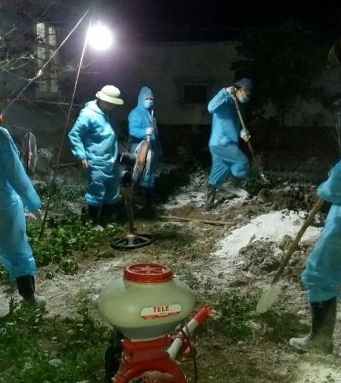 Số lợn bị dịch bệnh được huyện Thiệu Hóa tiến hành tiêu hủy ngay trong đêm