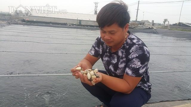 Nhờ nuôi ngao sinh sản mà mỗi tháng gia đình anh Phạm Văn Kim bỏ túi hơn 200 triệu đồng.