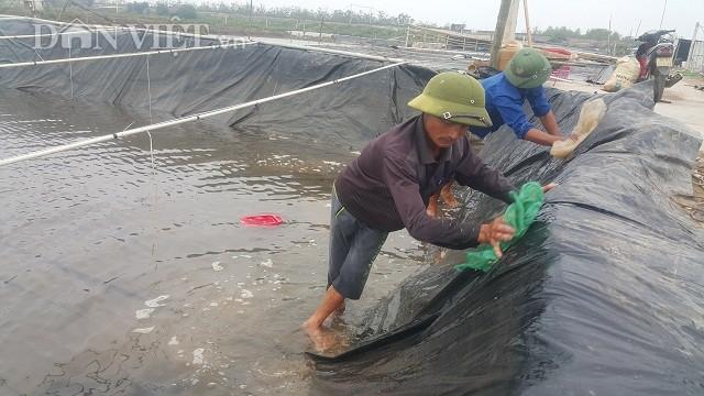 Để ngao giống luôn phát triển tốt thì cần thường xuyên vệ sinh ao ươm.