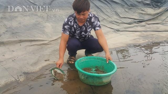 Trung bình mỗi tháng gia đình anh Kim bán được hơn 300kg cát chứa ngao giống li ti và thu về 350 triệu đồng. Bình quân cứ 1 kg cát có chứa ngao giống be li ti, anh Kim thu về hơn 1 triệu đồng.