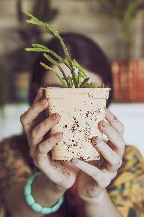 Người trồng cây ngàn năm đặc biệt thích màu xanh lá cây, và điều này được dự đoán sẽ gia tăng liên tục về doanh thu của những loại cây nhà lá vườn thú vị trong năm 2018.