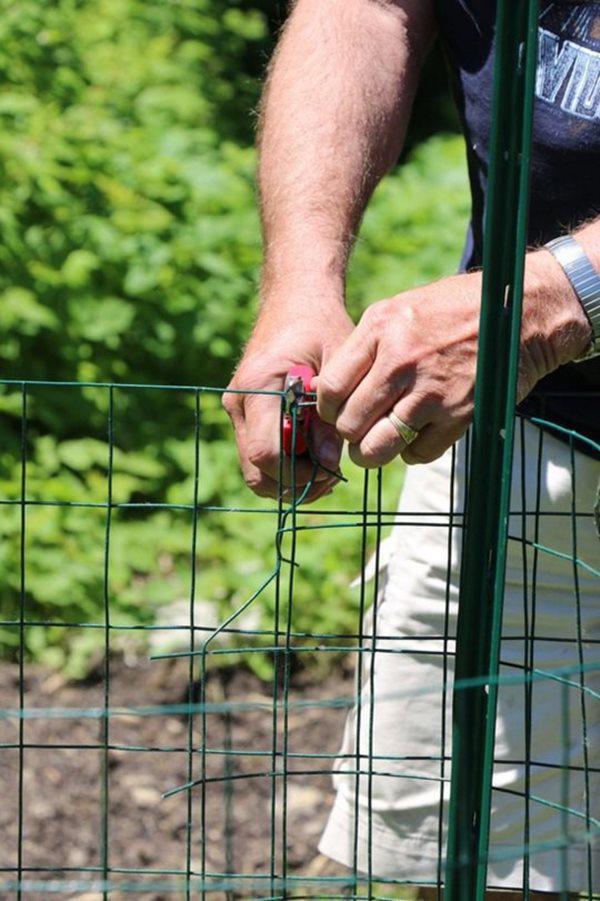 Sau đó, dùng lưới thép mảnh tạo thành một hàng rào bao xung quanh khu trồng cây vừa tạo ra.