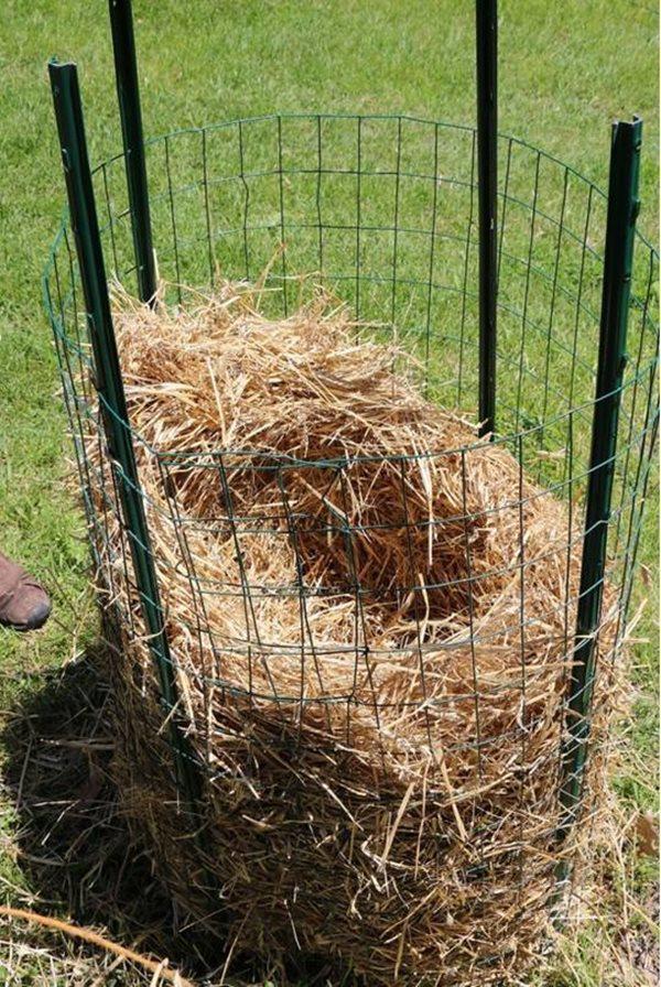 Tiếp theo, bạn trải rơm khô vào bên trong khu vực mình vừa quây xong. Cần lưu ý là rơm được xếp vòng quanh bên ngoài cùng sát hàng rào, để trống phần ở chính giữa của khu trồng.