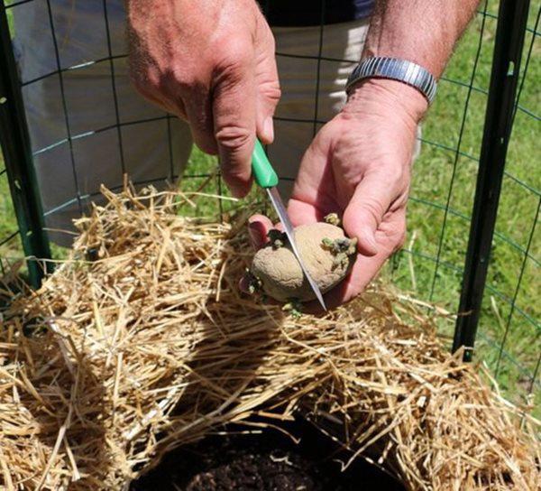 Sau đó, đem phân bón đã ủ thả vào trung tâm của khu trồng rau.