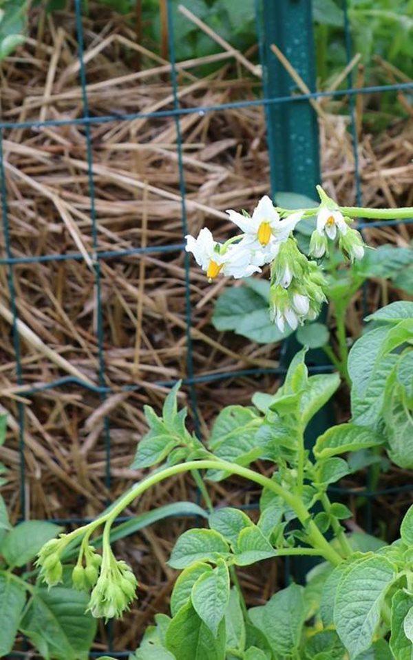 Những bông hoa đầu tiên bắt đầu nở, báo hiệu một mùa màng bội thu