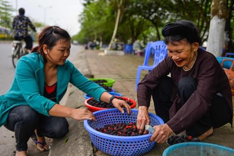 Những ngày này đi xe trên QL32 đoạn qua huyện Phúc Thọ, Hà Nội nhiều người thường thấy các bà, các chị ngồi ven đường bán dâu trông căng mọng vừa hái từ vườn nhà lên.