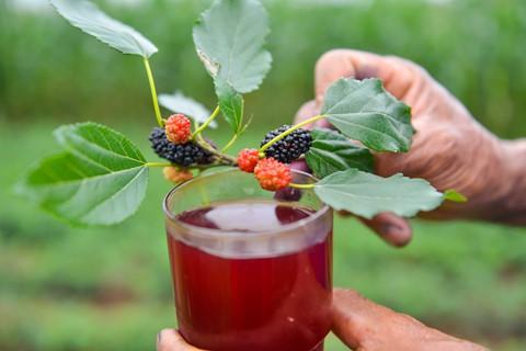 Ly nước siro dâu sánh màu đỏ thẫm như rượu vang chua ngọt mát lạnh là thứ giải khát lý tưởng cho những ngày hè oi bức của miền Bắc.