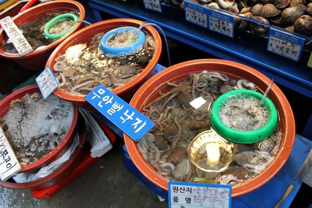 Bạch tuộc sống được bán rất nhiều trong các khu chợ ở Hàn Quốc.