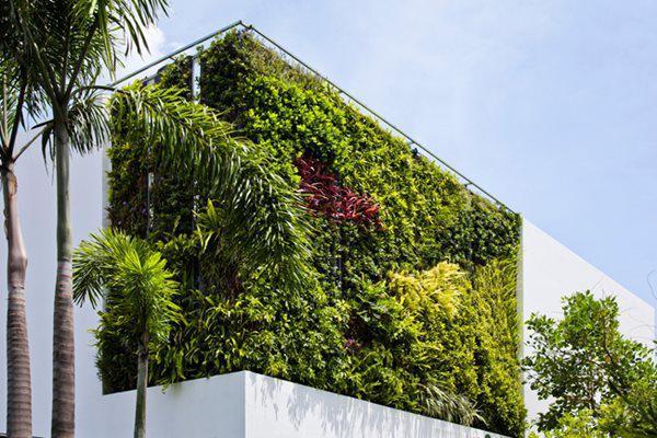Biệt thự tối giản với vẻ ngoài chỉ gồm 2 khối tường trắng kết hợp với 2 mảng vườn treo học theo mặt trước và mặt sau nhà.