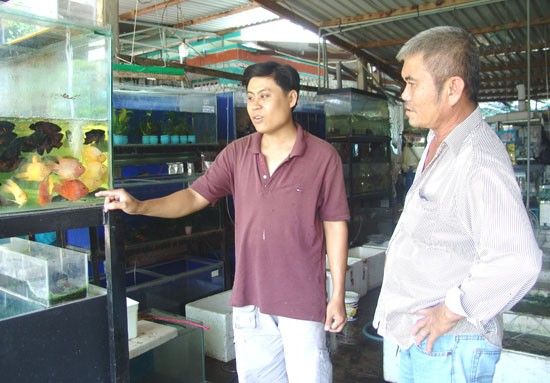 Cửa hàng trưng bày, giới thiệu và bán cá kiểng, tép kiểng của anh Hoài Thanh.