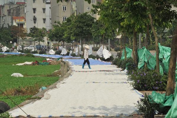 Những phế thải nhựa sau khi được nghiền nhỏ sẽ được mang ra ngoài đường để phơi.
