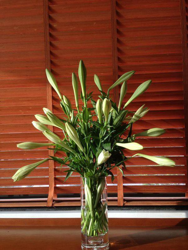 Dùng thuốc tẩy cũng là một cách tốt để giữ hoa loa kèn tươi lâu.