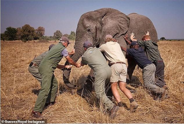 Hoàng tử Harry trong một lần tình nguyện ở châu Phi.
