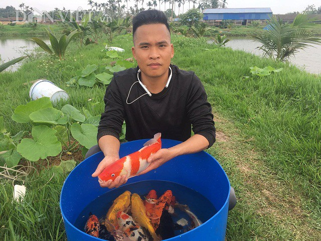 Chàng kỹ sư trẻ Vũ Văn Lực bỏ lương cao về quê đào ao thả nuôi cá Koi-loài cá được xem như là quốc ngư của Nhật Bản.