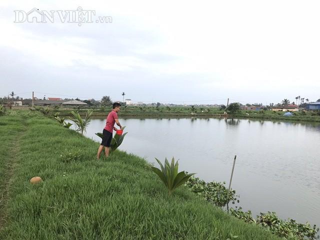 Trang trại nuôi cá Koi của gia đình anh Vũ Văn Lực rộng đến 10 mẫu và mỗi năm cung cấp ra thị trường khoảng 5 tấn cá Koi.