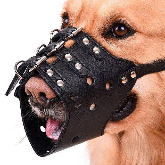Cho chó ra đường cần đeo rọ mõm. Ảnh minh họa.