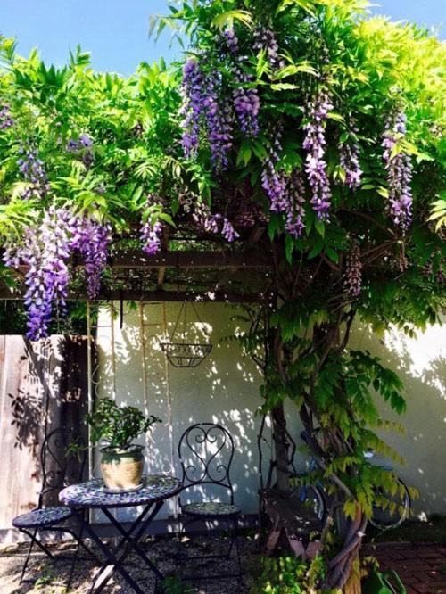 Vườn cây tươi tốt với rất nhiều các loại hoa.