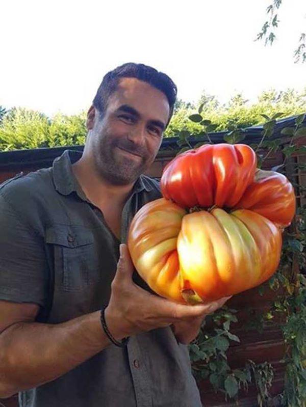 11. Chúng tôi hy vọng rằng có một bát đủ lớn cho món salad sẽ được làm bằng cà chua này.